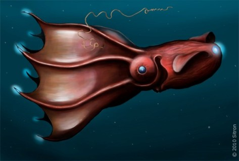 Adult vampire squid